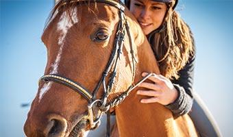 Formation pour le bien être de votre cheval - Classequine