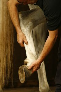 visite achat cheval