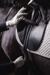 blessure-sangle-cheval