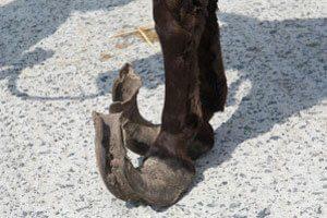 pieds-longs-cheval
