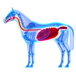 colique-cheval