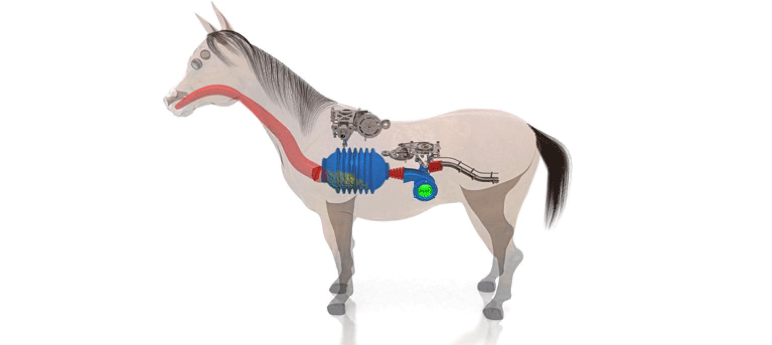 Maladie redoutée par-dessus tout, la colique chez le cheval fait trembler tout le monde équin ! Mais savez-vous exactement ce que cela veut dire ? Et de quoi il s'agit ?