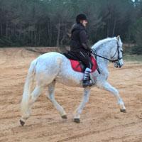 Joelle cheval