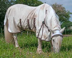 Pourquoi mon cheval se gratte classequine - Chat qui perd pas ses poils ...