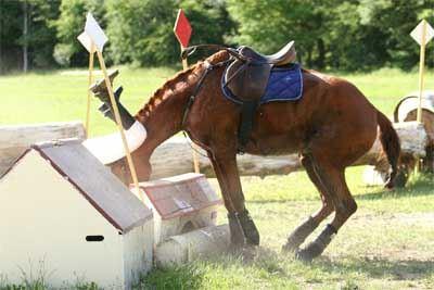 cheval-refuse-de-sauter