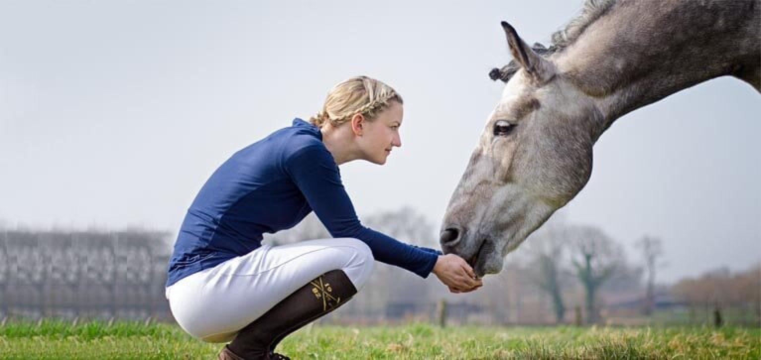 frais veterinaires cheval