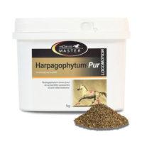 harpagophytum cheval