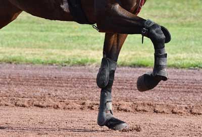 cheval à l'effort