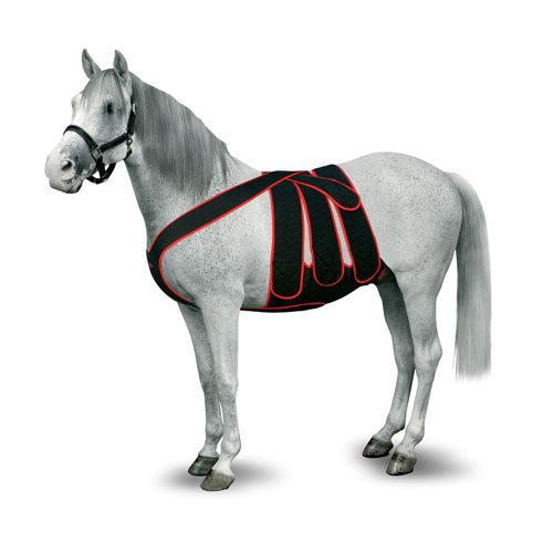 Bandage abdominal de soutien cheval