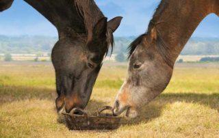 complément alimentaire pour mon cheval