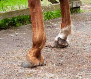 Gale de boue paturon cheval