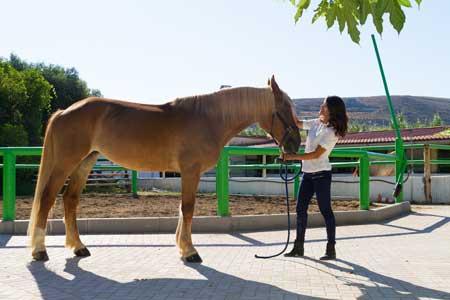 symptome myosite cheval
