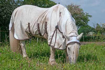 chemise anti-mouche cheval