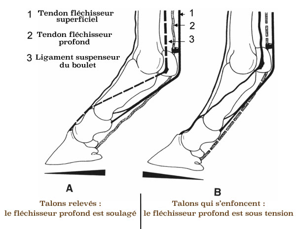 ferrure orthopedique cheval