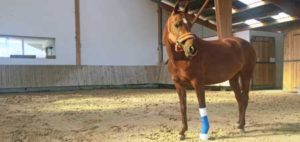 blessure cheval