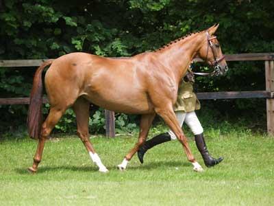 cheval boiterie