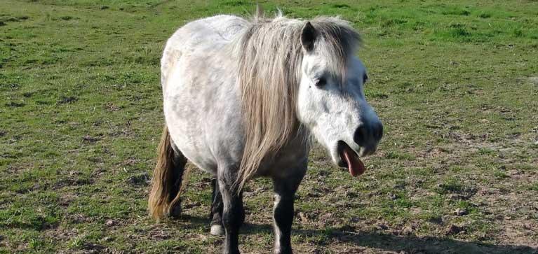cheval tousse