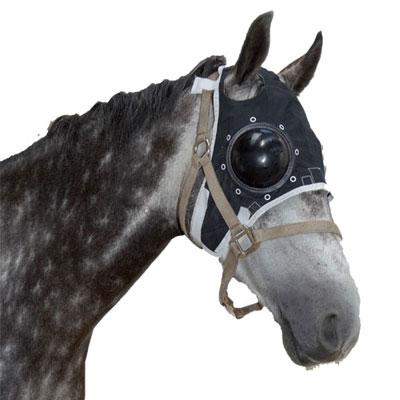 masque uveite cheval