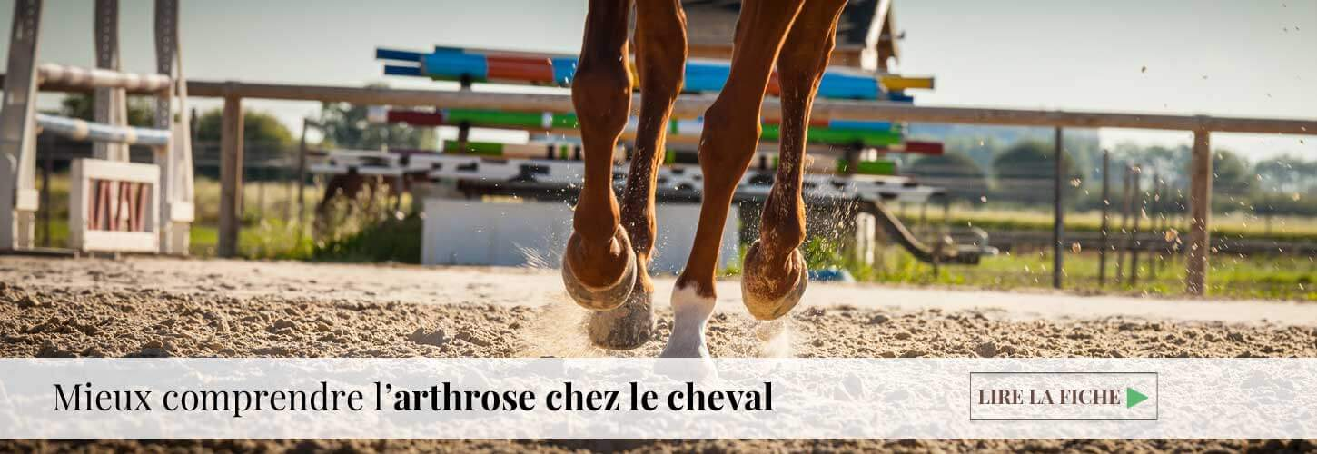 Arthrose cheval