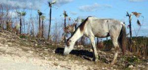 Maladies générales chez le cheval