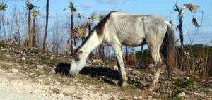 amaigrissement cheval