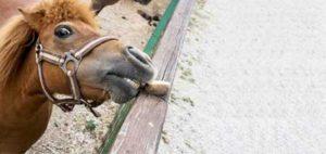 Troubles digestifs chez le cheval