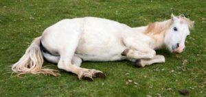 colique cheval