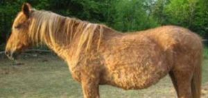 cushing cheval