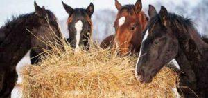 emphyseme cheval