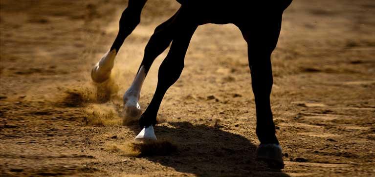 lymphangite chez le cheval