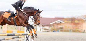 tendinite flechisseur profond cheval
