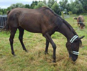 perte etat cheval