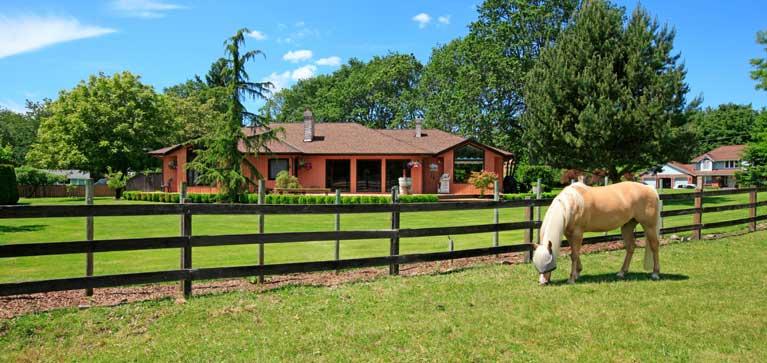 avoir son cheval chez soi