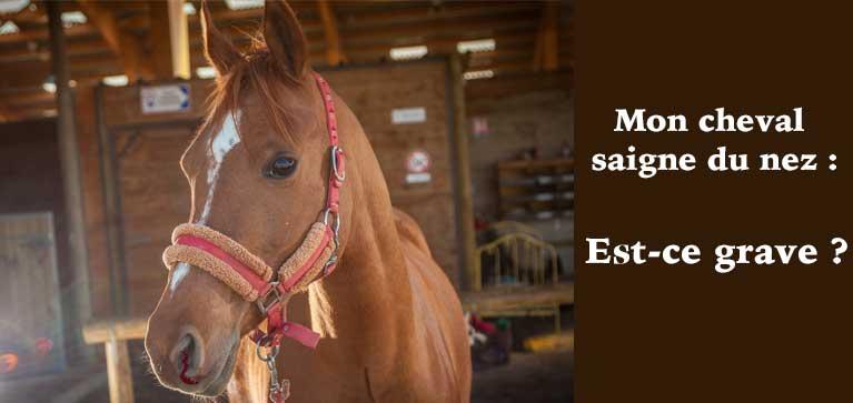 saignement nez cheval