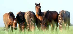 plante-cheval