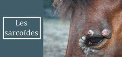 Sarcoïde-cheval