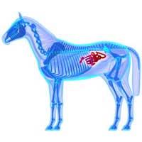 maladie-generale-cheval