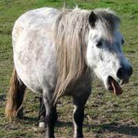 maladie-respiratoire-cheval
