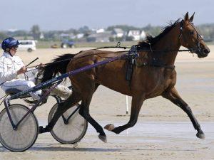 cheval Trotteur Français