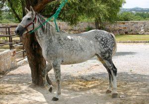 cheval Cheval Aztèque