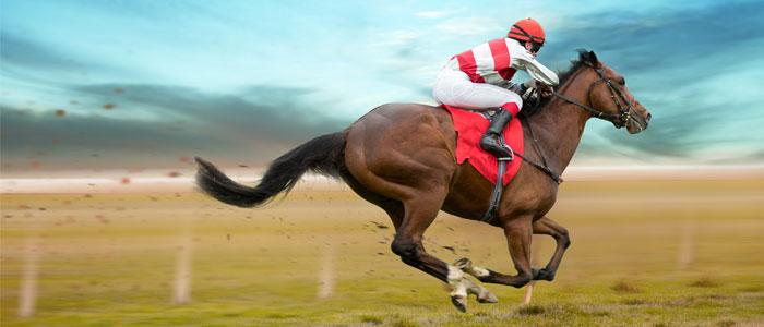 pur-sang-anglais-cheval