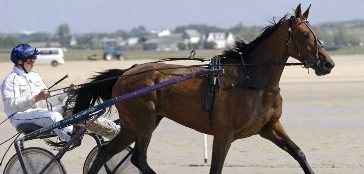 trotteur-francais-cheval