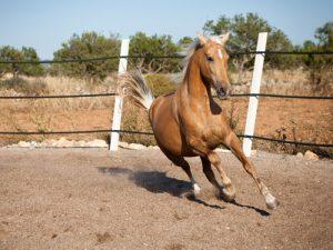 cheval Cruzado