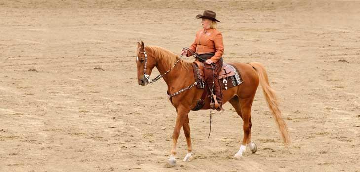 cheval-American-Saddlebred