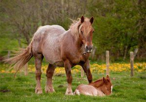 cheval Burguete
