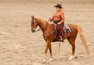cheval American Warmblood