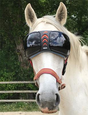 masque-uveite-cheval